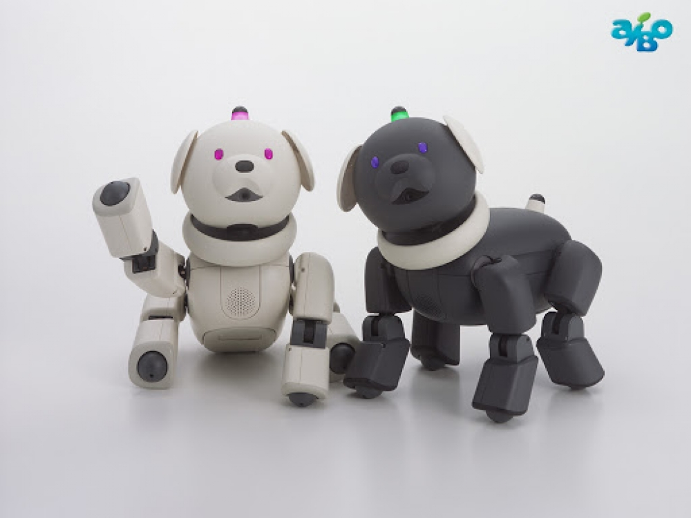 Aibo Leg Tremors and Head Tremors
